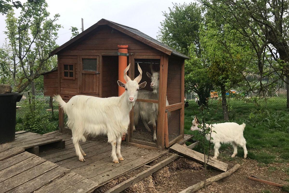 Azienda agricola Il favaio - Gli animali